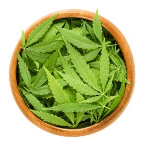 Marijuana Weed MissouriWe